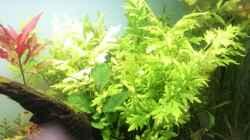 Pflanzen im Aquarium green quarry