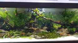 Aquarium Naturaquarium Aquascape