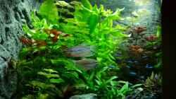 Besatz im Aquarium Juwel Trigon 190