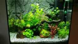 Aquarium Angie und Roberts Unterwasserwelt