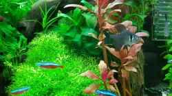 Besatz im Aquarium Angie und Roberts Unterwasserwelt