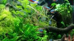 Pflanzen im Aquarium Angie und Roberts Unterwasserwelt