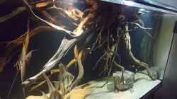 Aquarium 1000l Altum-Biotop