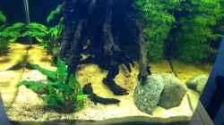 Dekoration im Aquarium Cambarellus