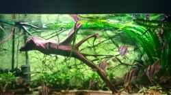 Aquarium Altum Traum