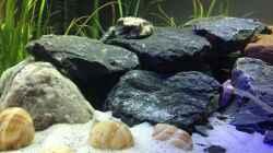 Dekoration im Aquarium Mein 1. Tanganjikasee-Becken