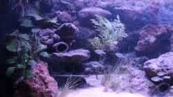 Aquarium Hypancistrus Heaven