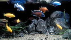 Aquarium Becken 32689