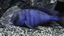 Besatz im Aquarium Becken 32689