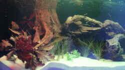 Aquarium Panaqolus Heaven