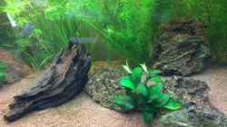 Pflanzen im Aquarium Unterwasserwelt