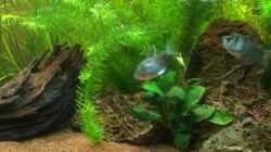 Aquarium Unterwasserwelt