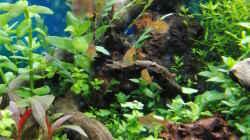 Aquarium Gesellschaftsbecken