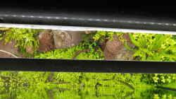 Technik im Aquarium Gesellschaftsbecken