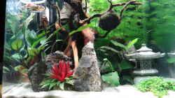 Dekoration im Aquarium Miniunterwasserwelt