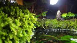 Aquarium Miniunterwasserwelt