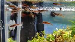 Besatz im Aquarium Zen Artist