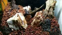 Aquarium Bucetank