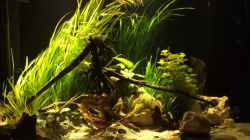 Aquarium Baby Knochenhechte