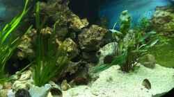 Besatz im Aquarium Becken 32778