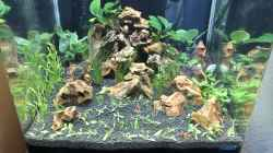 Aquarium Garnelen Cube