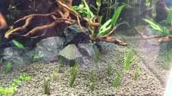 Pflanzen im Aquarium Garnelen Cube