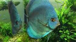 Besatz im Aquarium Am Waldrand