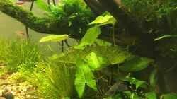 Pflanzen im Aquarium Am Waldrand