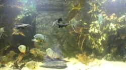 Besatz im Aquarium Wohnzimmer Uferzone