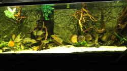 Aquarium Wohnzimmer Uferzone
