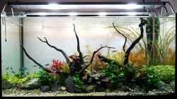 Aquarium Pflanzenwelt (Nur noch Beispiel)