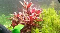 Pflanzen im Aquarium Pflanzenwelt (Nur noch Beispiel)