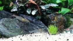 Dekoration im Aquarium Pflanzenwelt (Nur noch Beispiel)