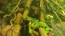 Pflanzen im Aquarium 8.000L