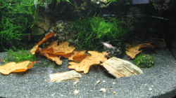 Dekoration im Aquarium Becken 3303