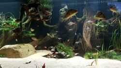 Aquarium Südamerika Amazonas