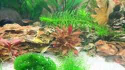 Unbekannter Fisch der als Ei mit einer Pflanze eingezogen ist