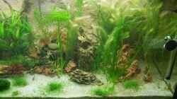 Aquarium - Rechts
