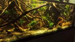 Dekoration im Aquarium Becken 33203