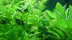 Dekoration im Aquarium Becken 33229