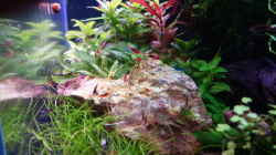 Besatz im Aquarium Magic Aquascaping