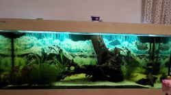Aquarium Welsbecken 400Liter
