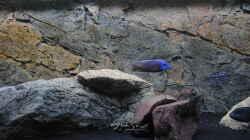 Aquarium Räuber