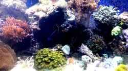 Besatz im Aquarium Mein kleines Riff