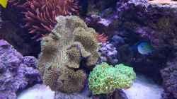 Aquarium Meerwasseraquarium