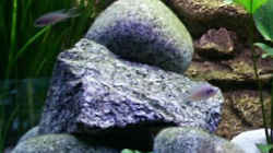 Granit,  Carrarakies im Hintergrund