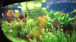 Dekoration im Aquarium Becken 3368