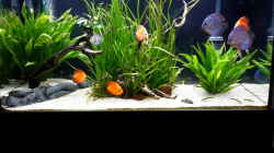 Aquarium Diskus