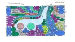 Nummerieren von Hintergrung , Mittelgrund ,Vordergrund für meine Pflanzenliste