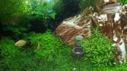 Pflanzen im Aquarium Fluval F60